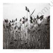 На фото Prospect Lake Grasses, Prospect Park