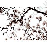 На фото Обои AS Creation Nature 036230
