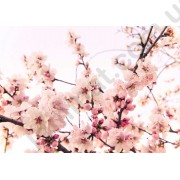 На фото Обои AS Creation Nature 036240