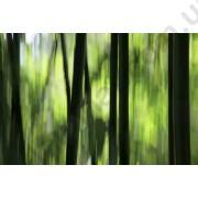 На фото Обои AS Creation Nature 036280