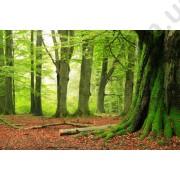На фото Обои AS Creation Nature 036290