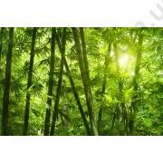 На фото Обои AS Creation Nature 036300