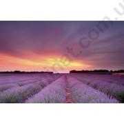 На фото Обои AS Creation Nature 036510
