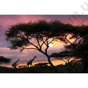 На фото Обои AS Creation Nature 036550