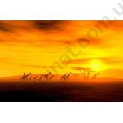 На фото Обои AS Creation Nature 036560