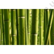 На фото Обои AS Creation Nature 031050