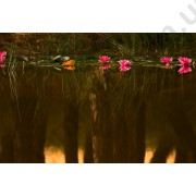 На фото Обои AS Creation Nature 031250