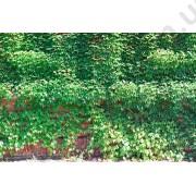 На фото Обои AS Creation AP Digital 2 470410