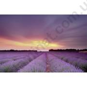 На фото Обои AS Creation XXLwallpaper 2 470300