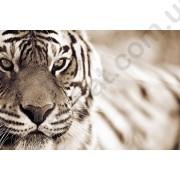 На фото Обои AS Creation XXLwallpaper 2 470316
