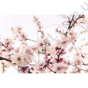 На фото Обои AS Creation XXLwallpaper 2 470327